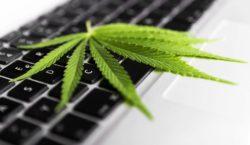 Cannabis leaf on keyboard